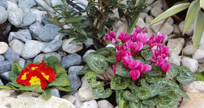 piante-fiori-giardino